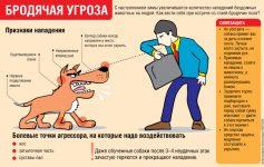 Как защитить себя от собак на улице