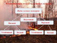 Низовые лесные пожары подразделяются